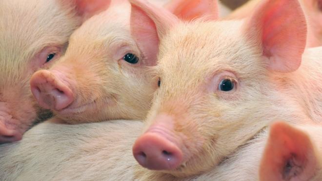 Животных хотят лечить препаратами для людей