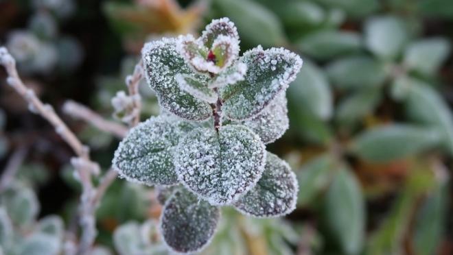 В Марий Эл снова прогнозируют заморозки
