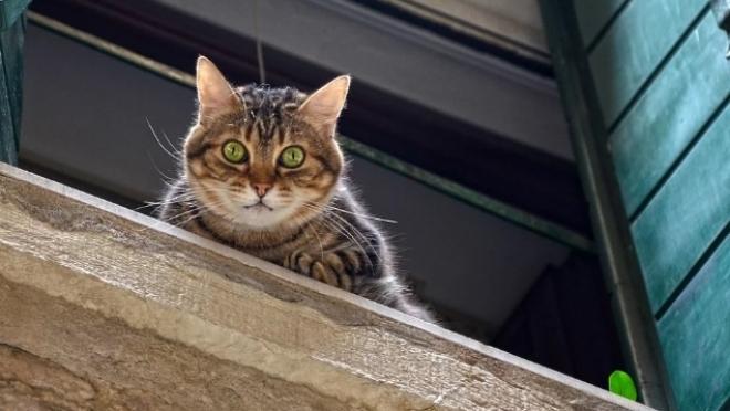 Семилетняя девочка выпала с 9-го этажа с котом