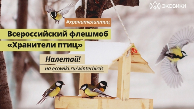 Жителей Марий Эл приглашают поучаствовать во флешмобе «Хранители птиц»