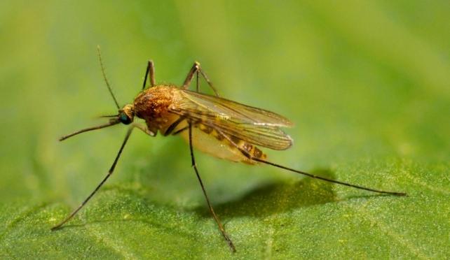 Давайте помечтаем: какой была бы жизнь без комаров