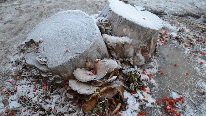 Синоптики пророчат нескорый приход зимы