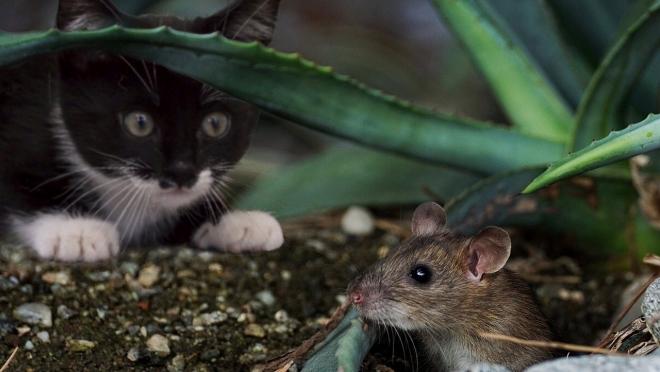 Около 80% случаев заражения мышиной лихорадкой в РФ приходятся на ПФО