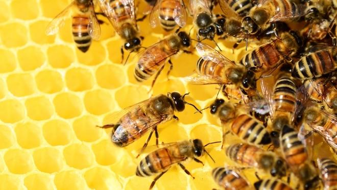 В Йошкар-Оле пройдёт ярмарка мёда «Медовый Спас»