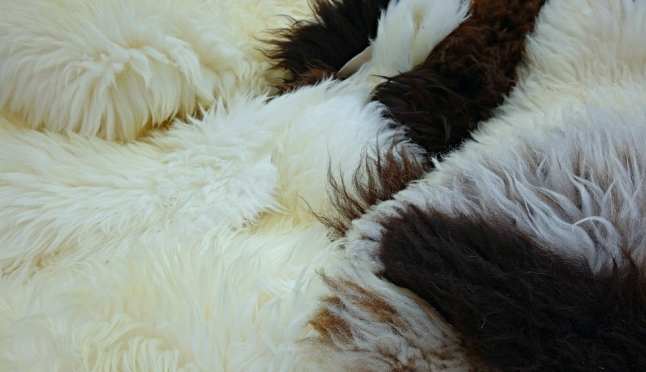 В Марий Эл судебные приставы изъяли овечьи шкуры
