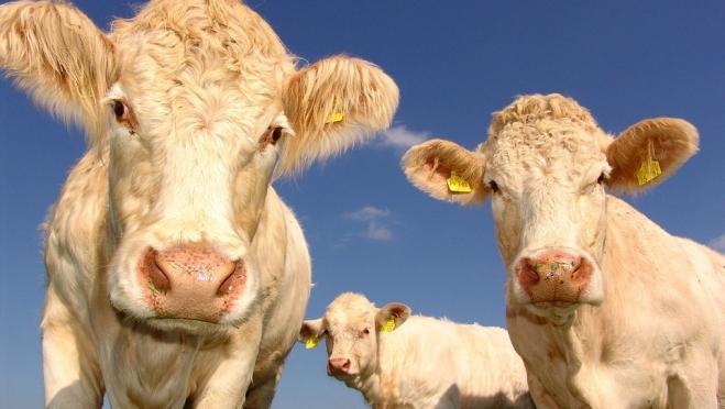Минсельхоз Марий Эл ждёт документы от фермеров на предоставление им субсидий