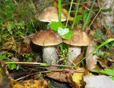 То, что вы хотели знать о грибах, но не нашли, у кого спросить