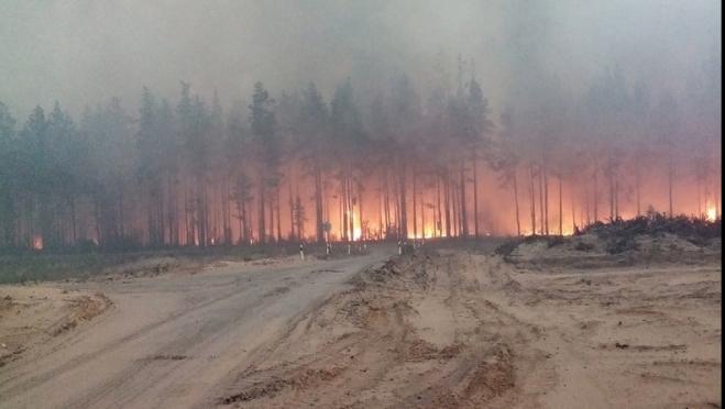 Организациям Марий Эл для возмещения расходов после лесных пожаров выделено почти 4 млн рублей