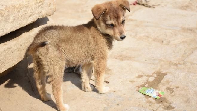 В Марий Эл появились собаки с желтой серёжкой в ушах