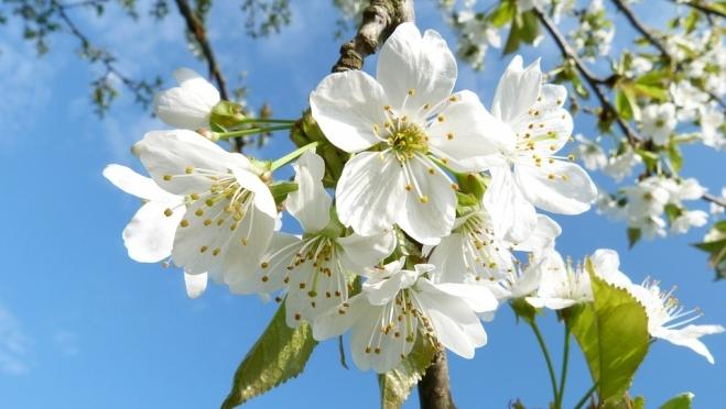 Цветень, снегогон, ручейник: приметы апреля