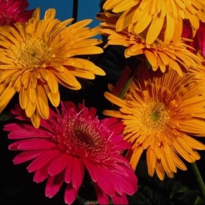 Цветы как женщины прекрасны