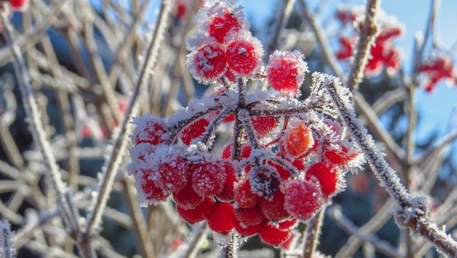 Синоптики обещают сентябрьские заморозки