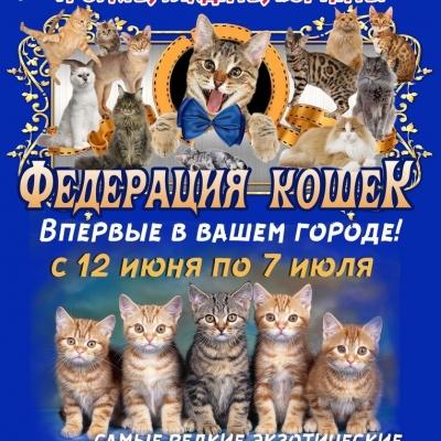 Федерация кошек