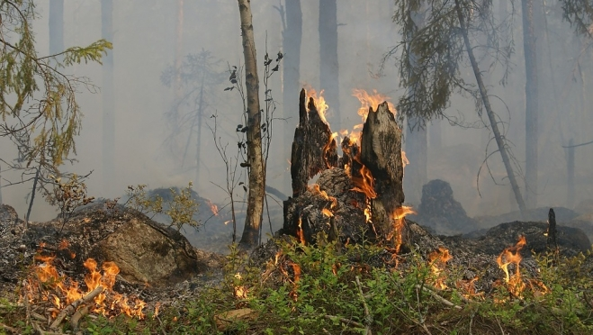 В выходные в марийских лесах прогнозируется высокая пожароопасность