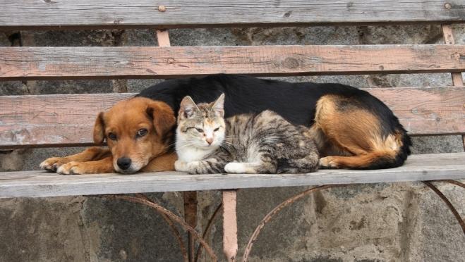 В России приняты законы, защищающие животных