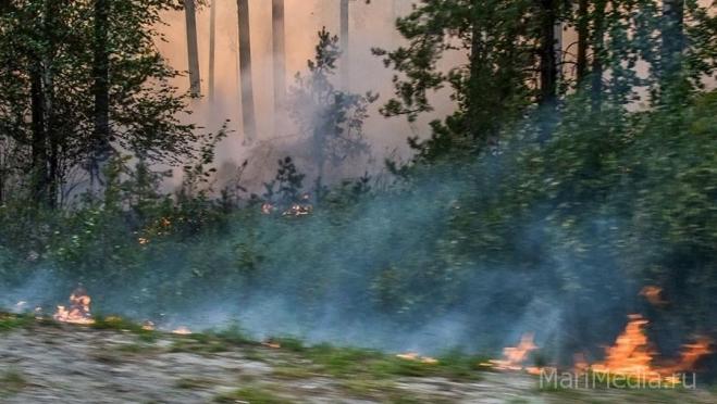 2021 год признан рекордным по площади лесных пожаров в России