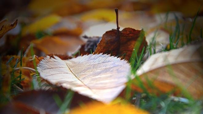 Октябрь – листопад