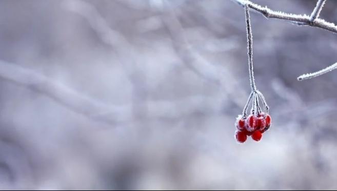 В Марий Эл рождественские морозы остановились на отметке -10ºС