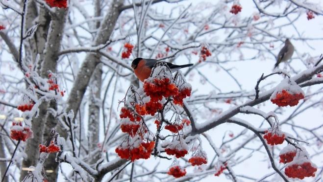 Грудень, зимник, студенец – народные приметы декабря