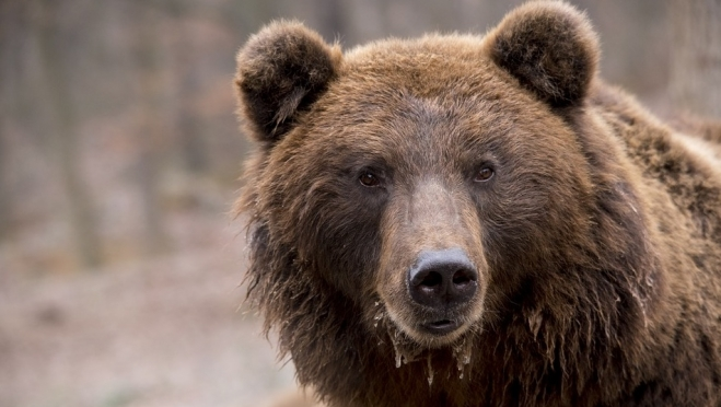 84-летняя бабушка во время сбора ягод нарычала на медведя
