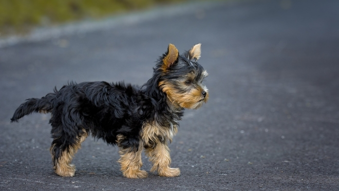 Водитель микроавтобуса пожалел собаку и спровоцировал ДТП