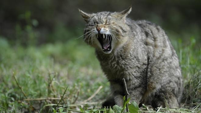 В Марий Эл за полгода 1 200 человек пострадали от укусов животных