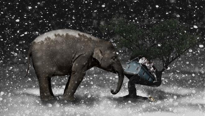 Слон, Мизгирь и Крыса – чего ожидать от наступающего года