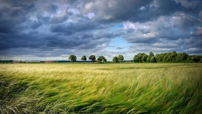 Завтра в Марий Эл обещают порывистый юго-восточный ветер и грозы