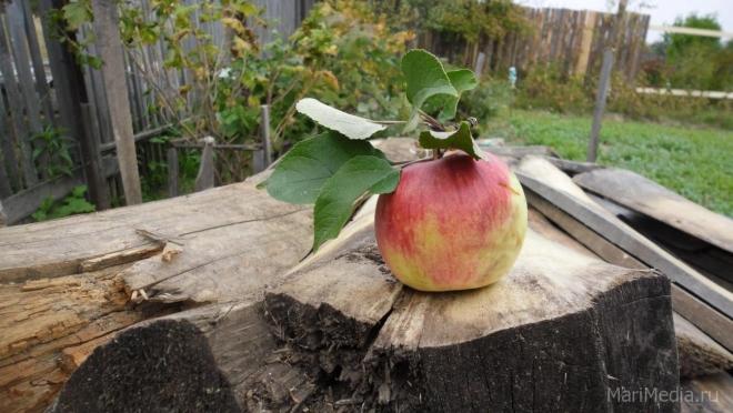 Мифы о яблоках