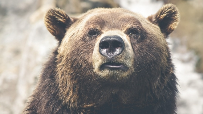 В Марий Эл медведь напал на человека в лесу