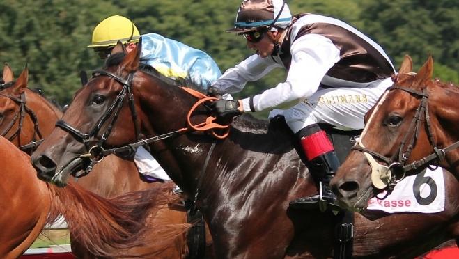 Впервые в Марий Эл появились спортивные федерации «лапты» и «конного спорта»
