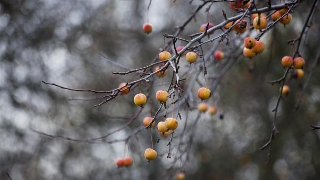 Листогной, грудень, полузимник: народные приметы ноября