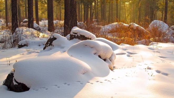 Зимний маршрутный учёт проложен по территории «Большой Кокшаги»