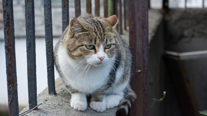 Сбежавший кот-наркокурьер может развалить уголовное дело
