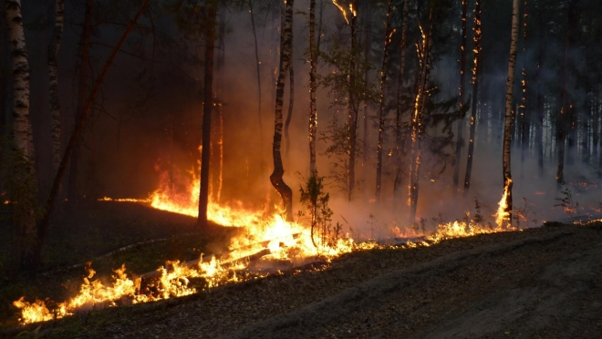Марий Эл вошла в ТОП-30 регионов, где тушат лесные пожары в первые сутки