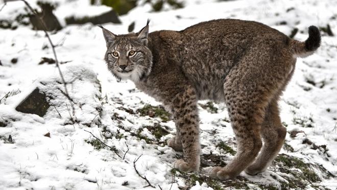 В заповеднике «Большая Кокшага» прошла перепись животных
