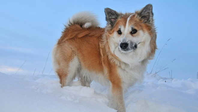 В Юринском районе собака спасла хозяйку из огня