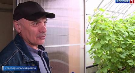 Супруги Магомедовы из Марий Эл выращивают огурцы без химикатов