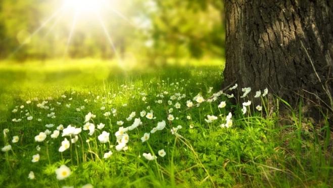 В Марий Эл тепло ожидается к концу недели