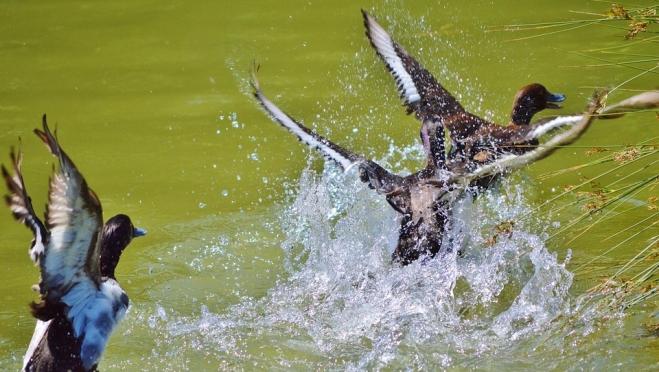 Весенняя охота в Марий Эл начнётся на неделю раньше