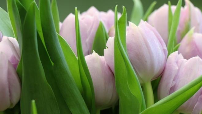 «Роскачество»: как выбрать идеальные цветы к 8 Марта