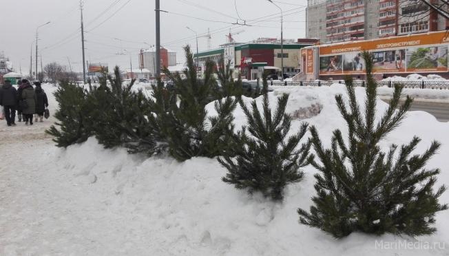 В декабре в Йошкар-Оле откроется единственный ёлочный базар