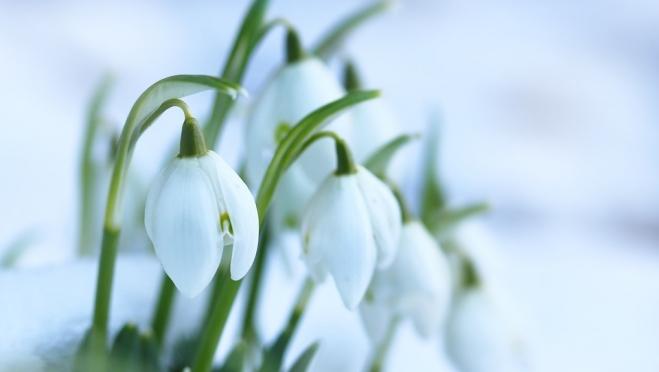 Березозол, бржезень, весновей – народные приметы марта